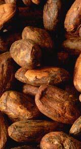 La matière première du cacao